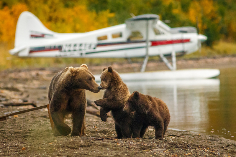 Alaska Bear Sighting Alaska Yacht Charter