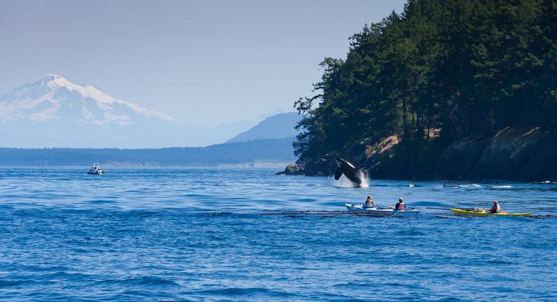 killer Whale Alaska Yacht Charter